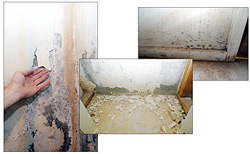 Moldy Damaged Basement Walls