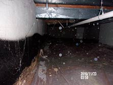 Dirty Musty Damp Crawl Space